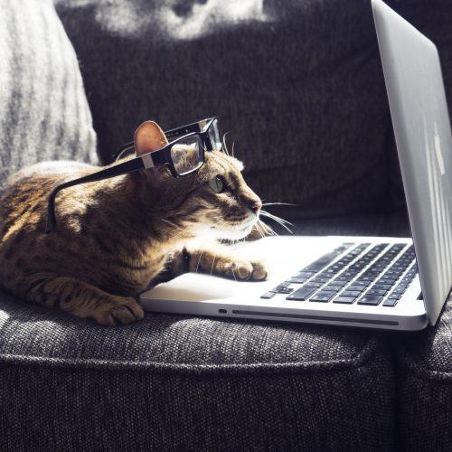 ¿Cómo tener éxito en la publicidad online? I